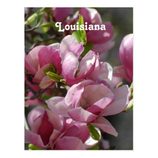 Magnolias Tarjetas Postales
