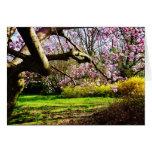 Magnolias y Forsythias Felicitaciones