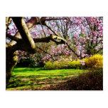 Magnolias y Forsythias Postal