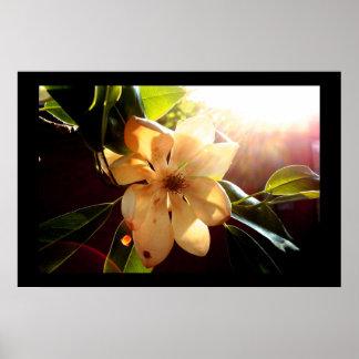 Magnolina (back-sun) poster