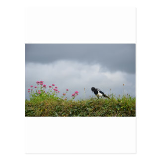 Magpie and wild flowers. postcard