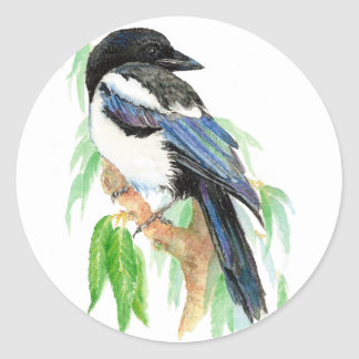 Magpie, Bird, Garden,  Animal, Nature, Wildlife Classic Round Sticker