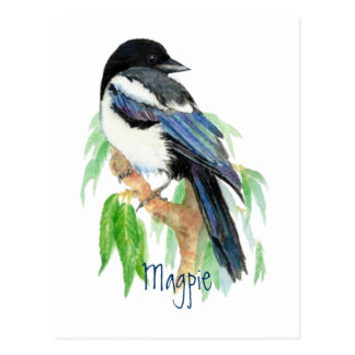 Magpie, Bird, Garden, Nature, Wildlife Postcard