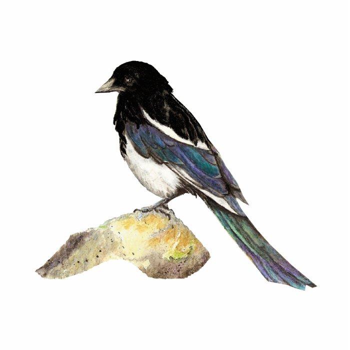 Magpie, Bird, Wildlife, Nature, Ornament