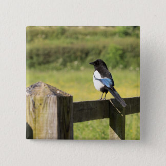 Magpie Button
