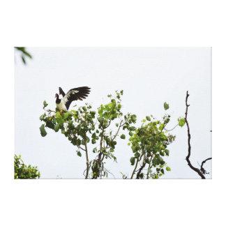 MAGPIE GEESE IN TREE IN RURAL QUEENSLAND AUSTRALIA CANVAS PRINT