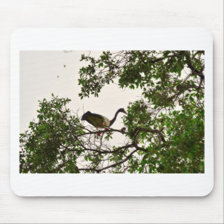 MAGPIE GEESE IN TREE QUEENSLAND AUSTRALIA MOUSE PAD
