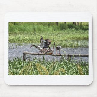 MAGPIE GEESE QUEENSLAND AUSTRALIA ART EFFECTS MOUSE PAD