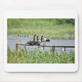 MAGPIE GEESE RURAL QUEENSLAND AUSTRALIA MOUSE PAD