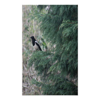 Magpie in a tree Print