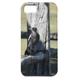 MAGPIE ON FENCE IN RURAL QUEENSLAND AUSTRALIA iPhone SE/5/5s CASE