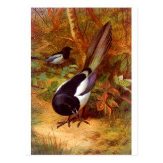Magpie wild bird post card