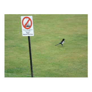Magpies have no respect for authority postcard