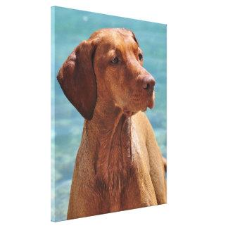 Magyar Vizsla Dog Canvas Print