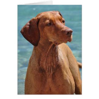 Magyar Vizsla Dog Card