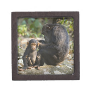 Mahale Mountains National Park, Tanzania Gift Box
