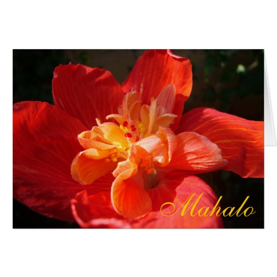 Mahalo Red-Orange-Yellow Hibiscus Card