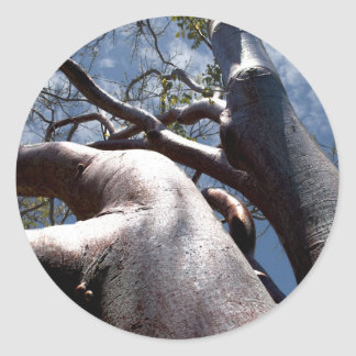 Mahogany Tree Classic Round Sticker