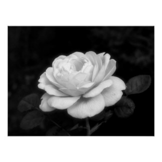 Maiden Boutique Rose Poster