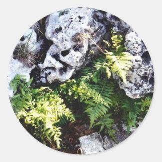 Maiden Hair Fern Classic Round Sticker