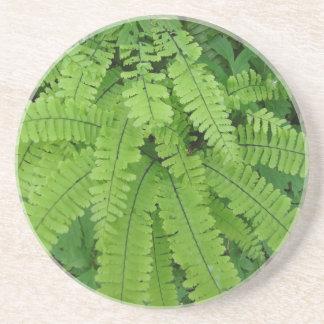 Maiden Hair Fern Coaster