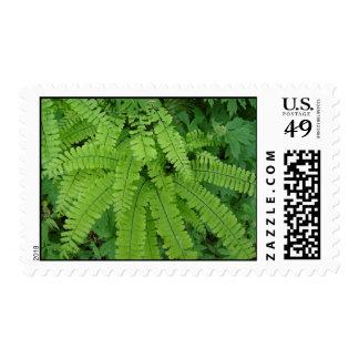 Maiden Hair Fern, Oregon Stamp