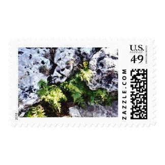 Maiden Hair Fern Stamp