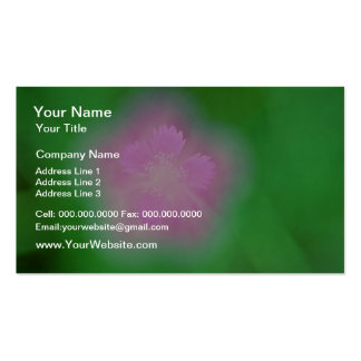 Maiden pink flowers White flowers Business Cards