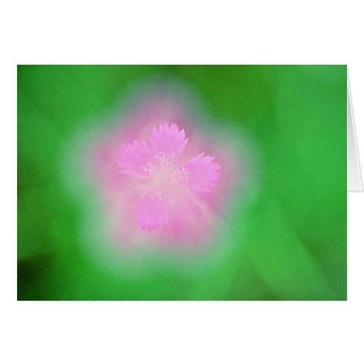 Maiden pink flowers White flowers Greeting Card