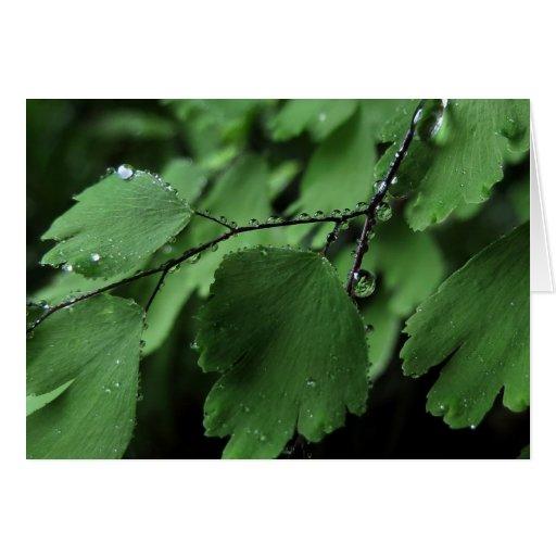 Maidenhair Fern and Raindrops Card