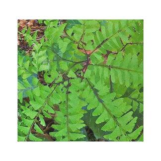 Maidenhair Fern Canvas Print