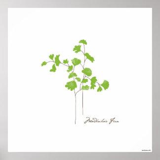 Maidenhair Fern Illustration   Botanic Poster