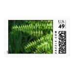 Maidenhair Ferns 2 Postage Stamp