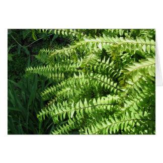 Maidenhair Ferns Greeting Card