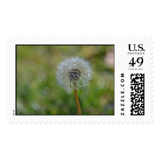 Mail a wish with this stamp!