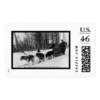 Mail Delivery by a Dog Team 1905 Postage Stamps