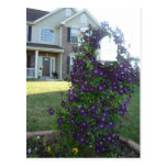Mailbox and Clematis Post Cards