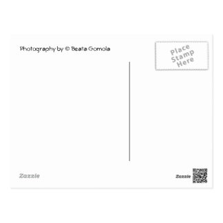 Mailboxes Postcard