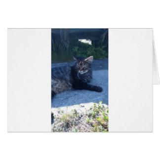 Main cool cat card