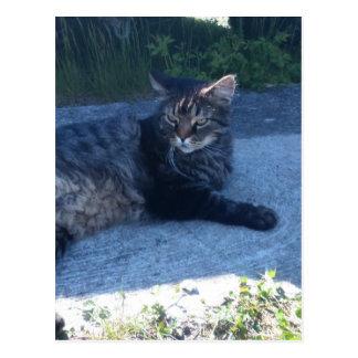 Main cool cat postcard