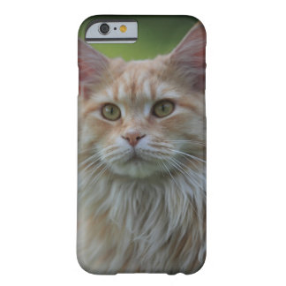 Main coon cat barely there iPhone 6 case