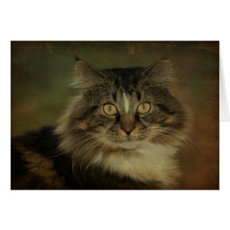 Main Coon Cat Notecard