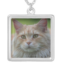 Main coon cat silver plated necklace