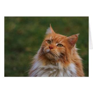 MainCoon Katze Card