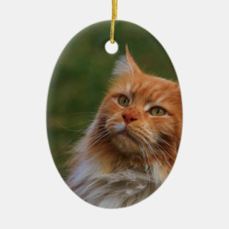 MainCoon Katze Ornaments