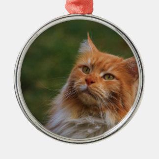 MainCoon Katze Christmas Ornament