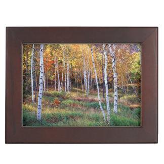 Maine, Acadia National Park, Autumn Memory Box