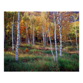 Maine, Acadia National Park, Autumn Poster