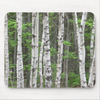 Maine Birch Grove Mouse Pad