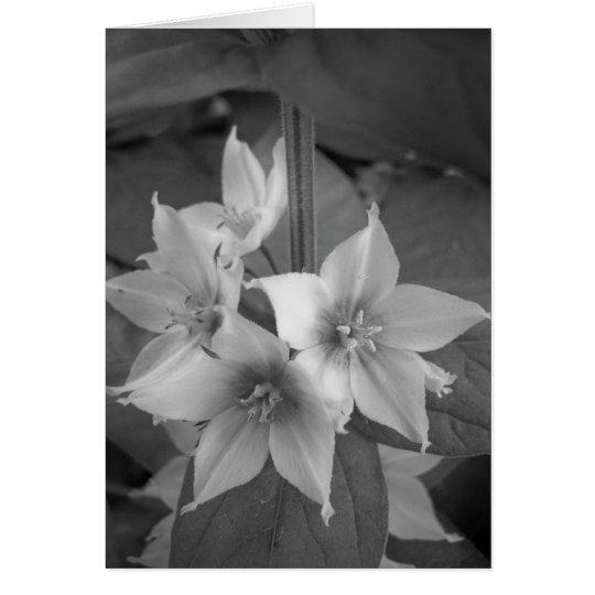 Maine_Black+White_106 Card